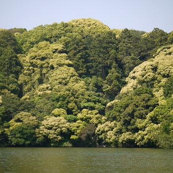 桜ヶ池 池宮神社